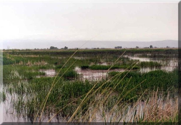 southlateralA_wetlands