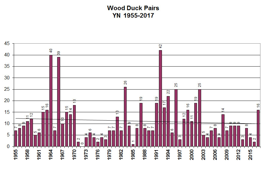 Wood Duck Breeding Pairs, Click to Enlarge